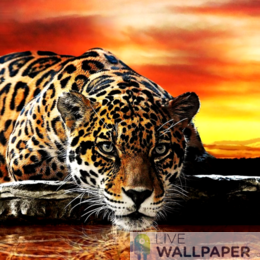 Leopard at Water Logo
